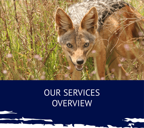 Umhlaba Environmental Consulting Service overview fox min