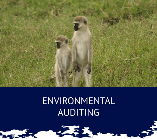 Umhlaba Environmental Consulting auditing monkeys min